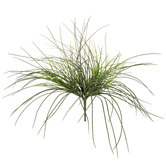 Monkey Grass Bush