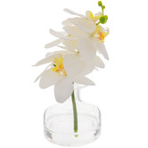 White Phalaenopsis In Glass Vase