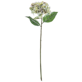 Two-Tone Green Hydrangea Stem