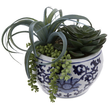 Succulents In Round Pot