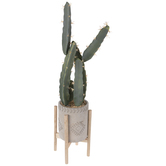 Cactus In Gray Pot