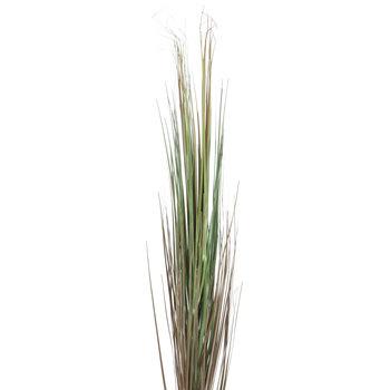 Onion Grass Spray