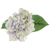 Gray, Green & Purple Hydrangea Stem