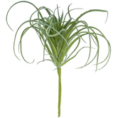 Light Green Air Plant