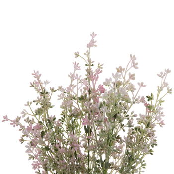 Light Pink Astilbe Seed Bush