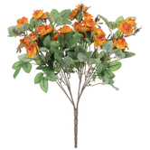 Orange Mini Rose Bush