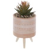Succulent In Geometric Etched Pot