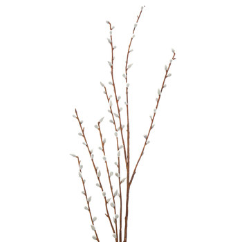 Gray Pussy Willow Branch