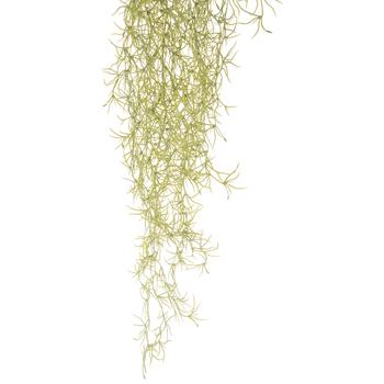 Spanish Moss Hanging Bush