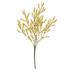 Yellow Astilbe Bush