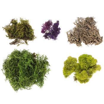 Moss Mix