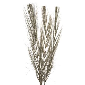 Dried Khajur Bundle