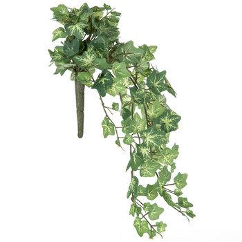 Variegated English Ivy Hanging Bush