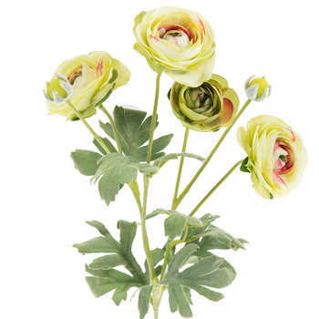 Soft Green Ranunculus Spray