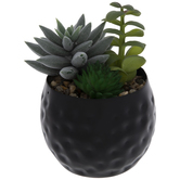 Succulents In Metal Pot