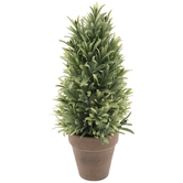 Rosemary Topiary In Pot