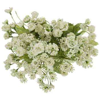 White Queen Anne's Lace Bush