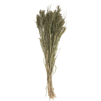 Natural Panicum Bundle