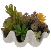 Succulents In Shell
