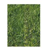 """Grass Scrapbook Paper - 8 1/2"""" x 11"""""""