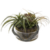 Air Plants In Glass Pot