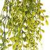 English Ivy Hanging Bush