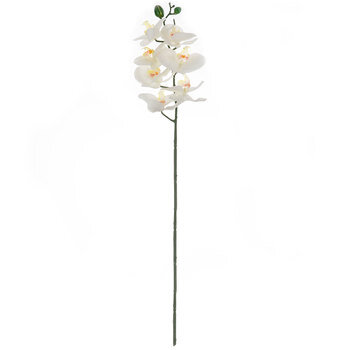 White True Touch Phalaenopsis Orchid Stem