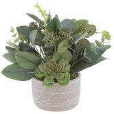 Eucalyptus & Succulent In Geometric Pot