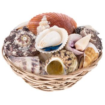 Seashells Basket