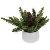 Pine & Pinecones In White Pot
