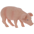 Feeding Piglet