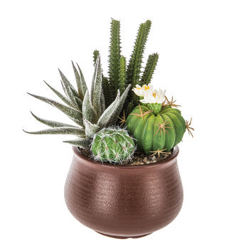 Succulents In Brown Pot