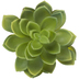 Green Succulent Pick