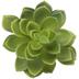 Green Succulent Pick