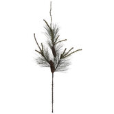 Monterey Pine & Pinecone Branch