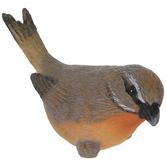 Gray & Orange Bird
