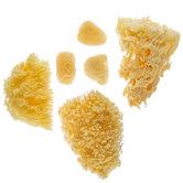 Assorted Natural Sponges - Large