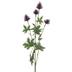 Eggplant Thistle Stem