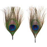Peacock Natural Feather Picks - 4""