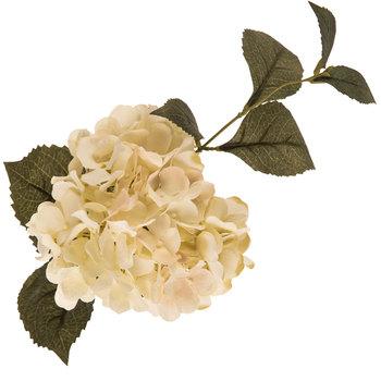 Cream Hydrangea Stem