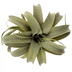 Flocked Air Plant Pick