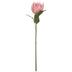 Pink Protea Stem