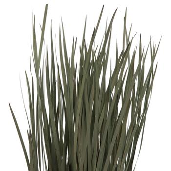 Dried Flax Grass Bundle