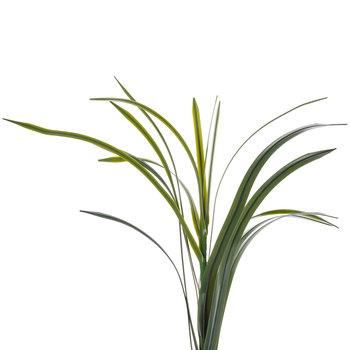 Green Rainbow Grass Stem