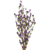 Purple Wildflower Bud Bush