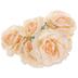 Peach Coral Rose Bush