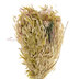Pink Flower & Dried Wheatgrass Bundle