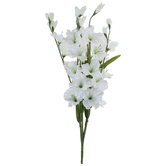 White Gladiolus Bush