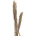 Dried Nanal Grass Stems