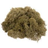 Spring Green Lichen